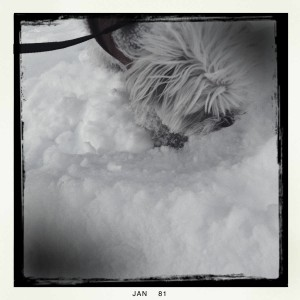 Tyler the dog out in the snow