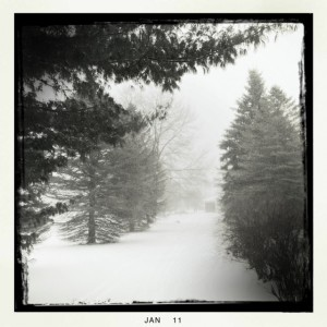 Snow and trees in Michigan
